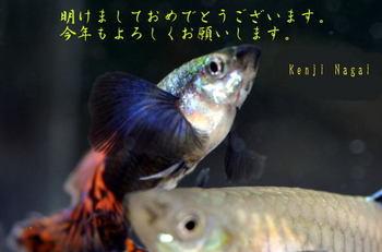 064-1.jpg